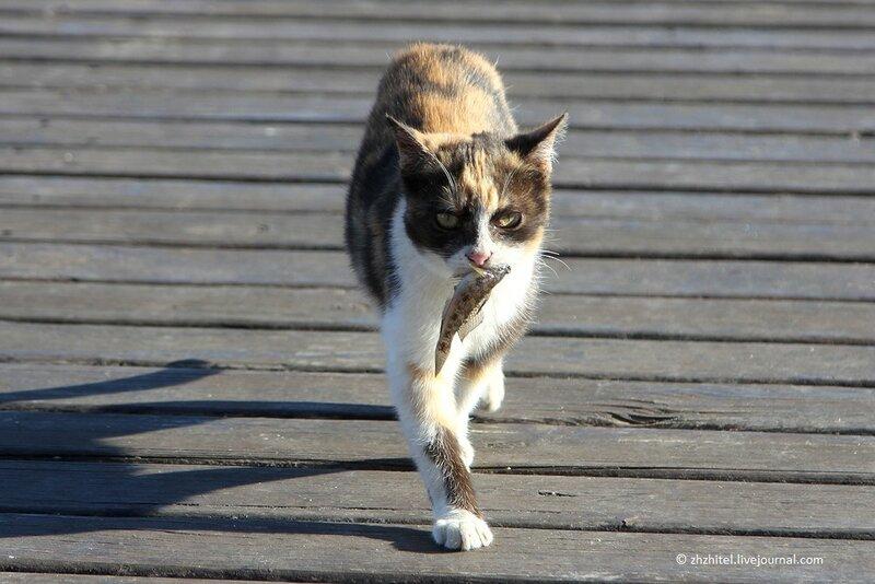 Севастополь захвачен котами