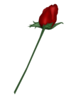 SSS_Roses_Element-8.png
