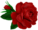 SSS_Roses_Element-16.png