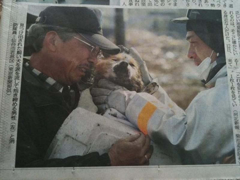 14. Собака встретилась с своим хозяином после цунами в Японии. 2011 год.