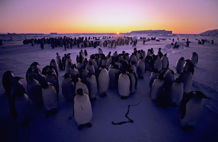 1. Самый большой в мире морской заповедник будет служить защите нетронутой дикой природы Антарк