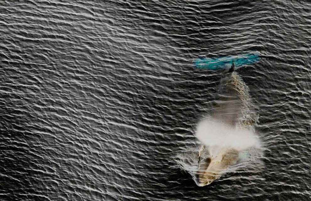 7. Айсберг. Как правило, айсберги образуются, откалываясь от шельфовых ледников. Подробнее о ни