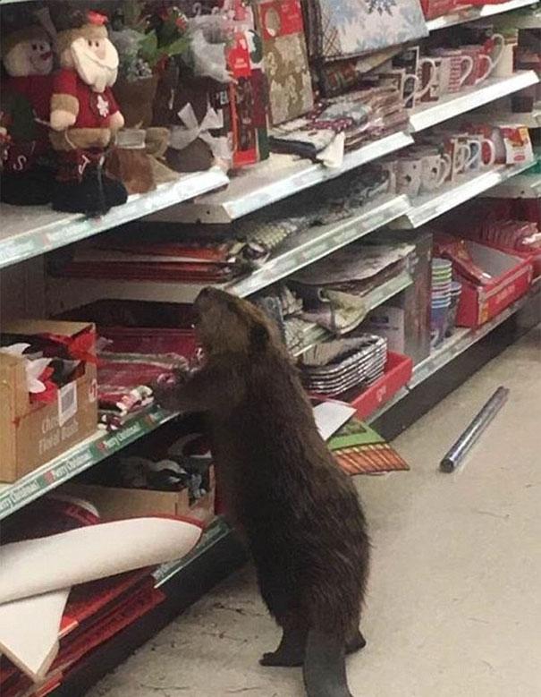 Бобер — похититель Рождества