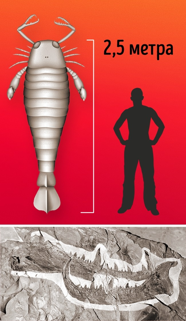 © National Geographic  Ракоскорпион— крупнейшее известное членистоногое. Они могли вырастать