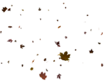 Flying_Leaves_by_zememz.png