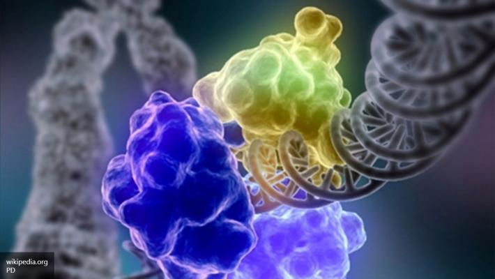 Ученые отыскали ген, выключение которого увеличивает длительность жизни на60%