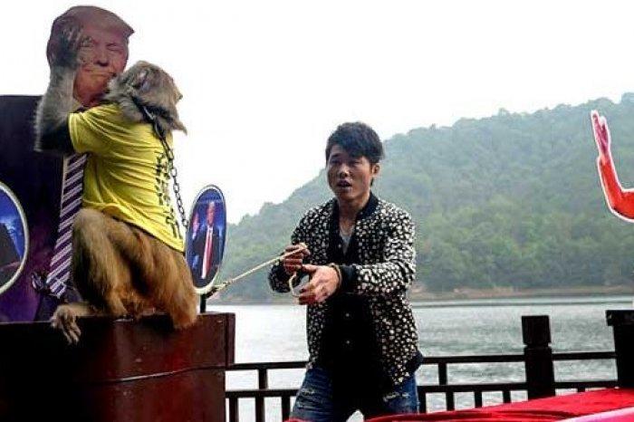 Обезьяна-пророк изШанхая предсказала результаты выборов вСША