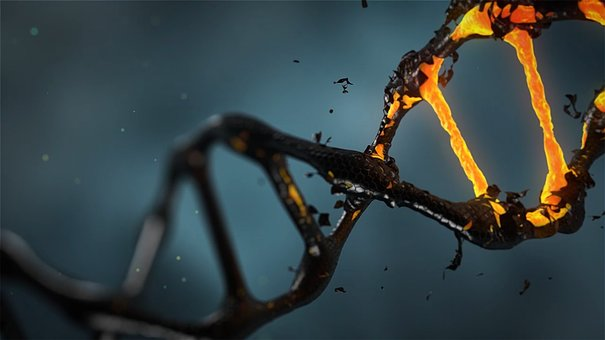 Ученые отыскали способ излечить животных отВИЧ