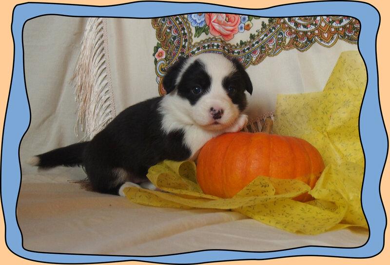 панда 2 для сайта.jpg