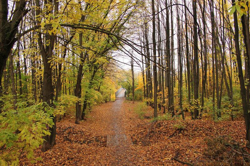 Осенний лес у перегона Уфа - Черниковка