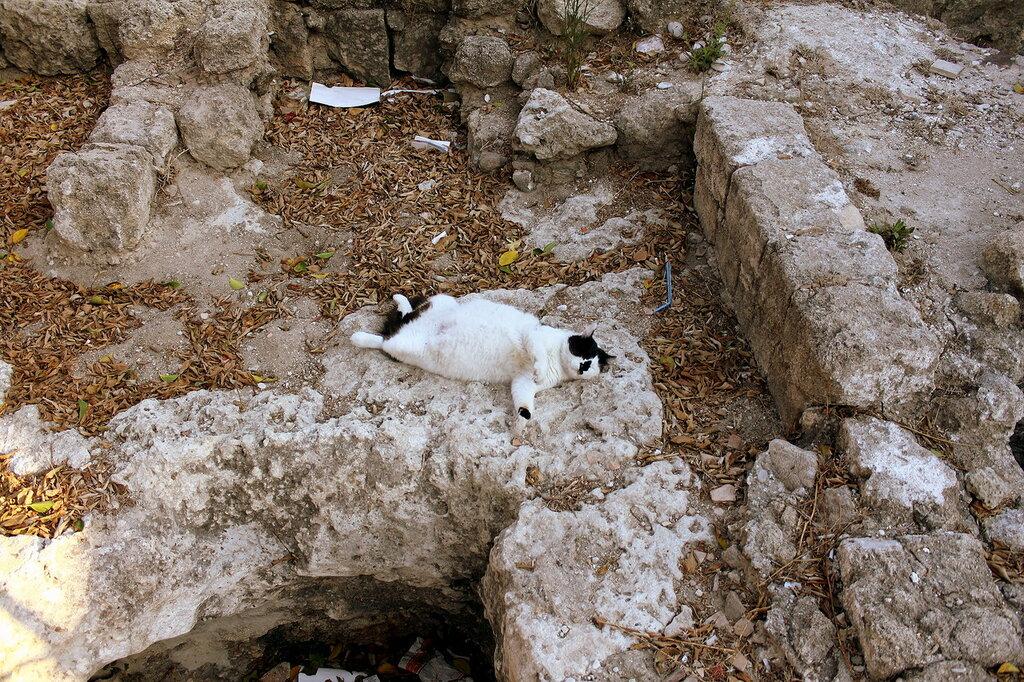 IMG_7694-Коты.jpg