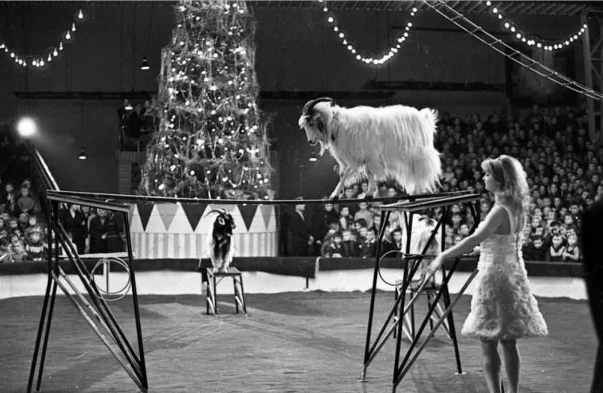 1960. Цирк. Муза Касьянова с дрессированными козами