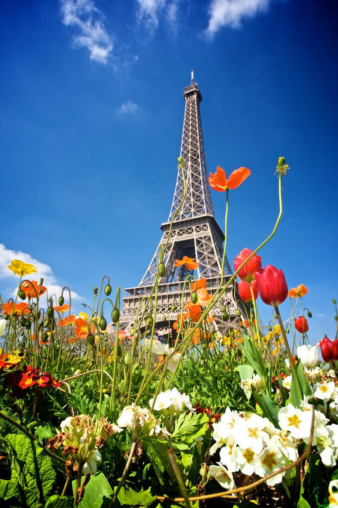 Flower_Eiffel_Tower.jpg