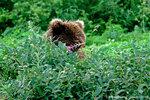 Медведица и цветочек