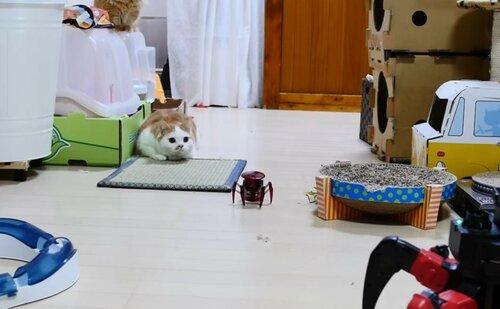 Робо-игрушки против котов