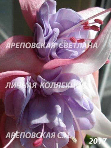 НОВИНКИ ФУКСИЙ. - Страница 5 0_19a024_142a45bc_L