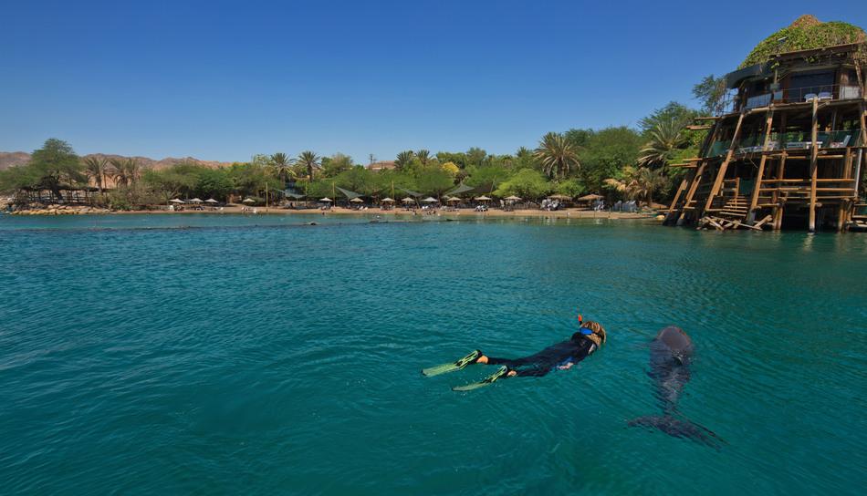 Дельфины — чудесные существа, и, если вы еще никогда с ними не плавали, обязательно отправляйтесь на