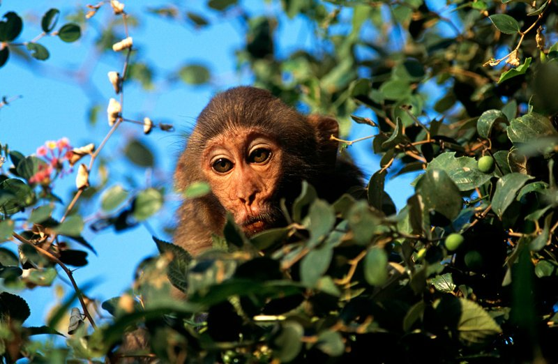 Фотографии животных Дона Хупера