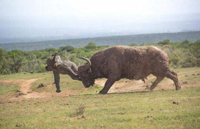 Олюление в мире животных