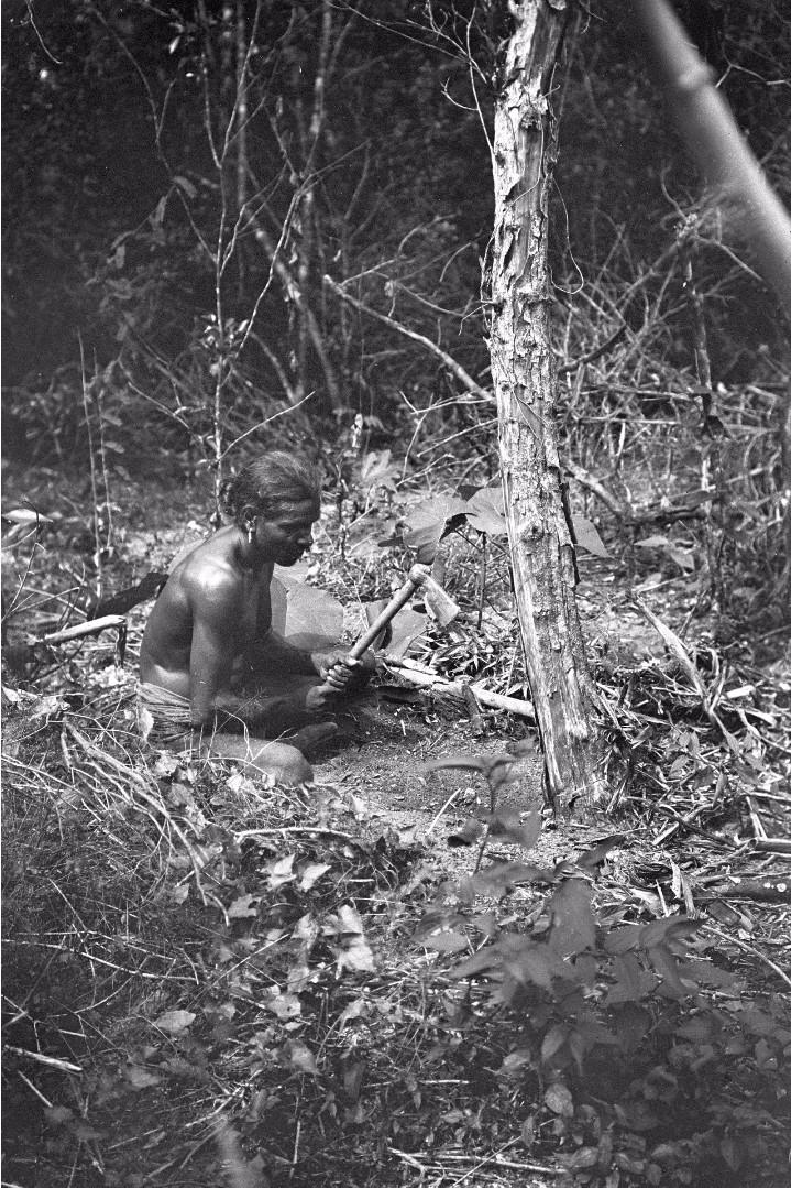 370. Лесной ведд выкапывает ямс