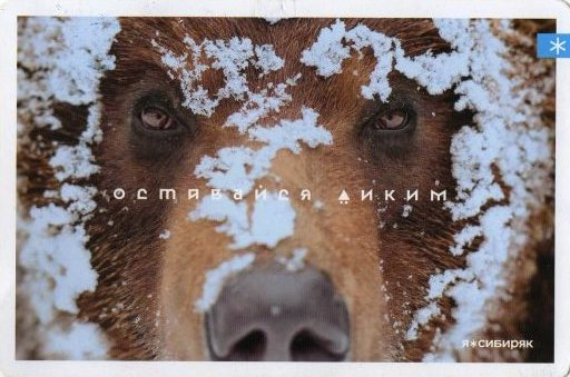 https://img-fotki.yandex.ru/get/169451/118912681.141/0_31370e_c28b251a_orig.jpg
