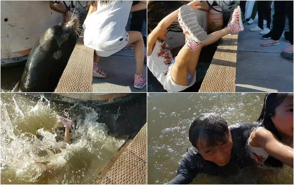 Морской лев затащил девочку в воду