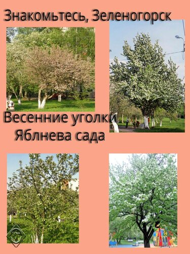 Весенние уголки Яблонева сада