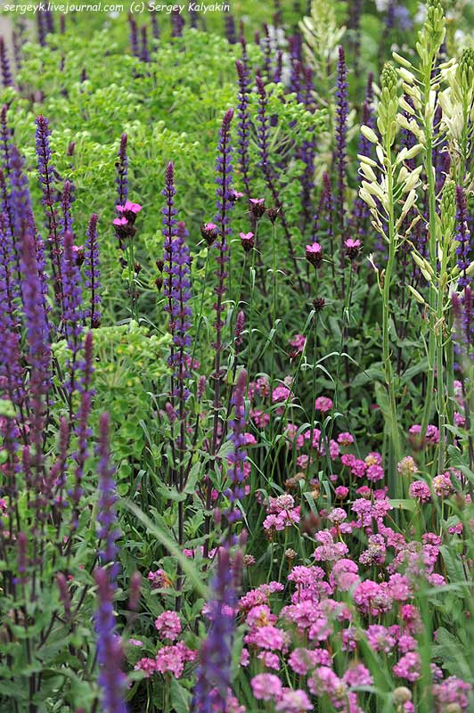 The RHS Greening Grey Britain Garden (120).jpg