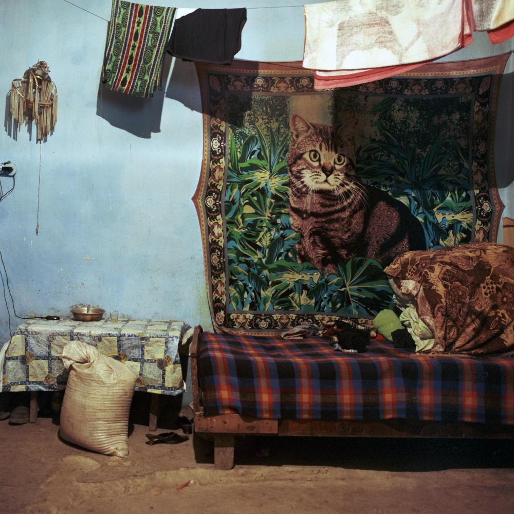 А по деревням — эпические плюшевые олени и такие вот коты.