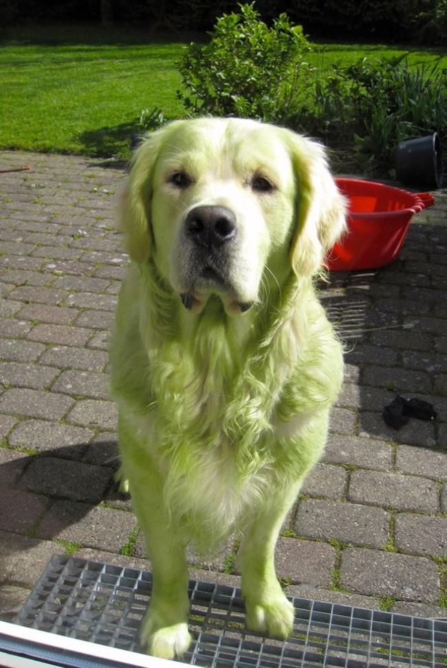 © Henderp  Поймал своего пса, когда онпытался стащить что-то измаминой сумки.