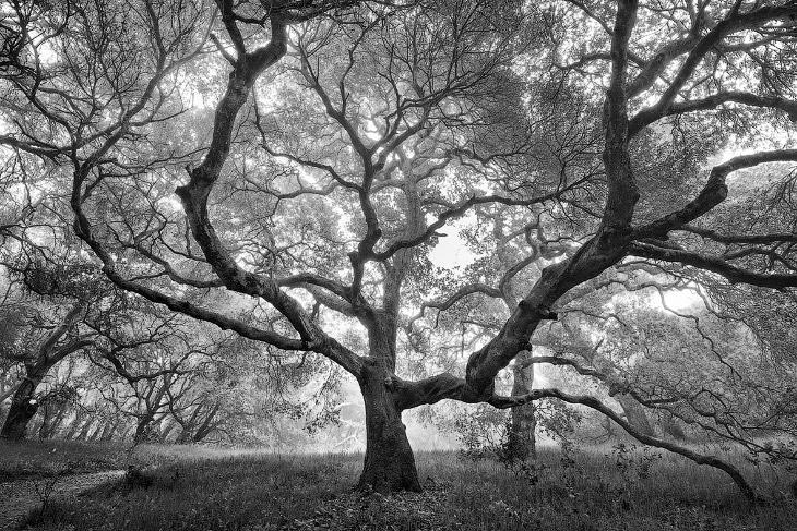 2. «Черно-белое», 1 место. Волны на Гавайях. (Фото Terry Koyama | USA Landscape Photographer of the