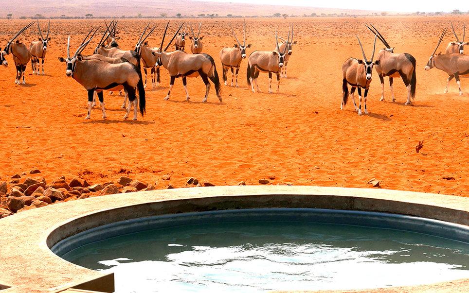 7. Обитатели заповедника Намби-Ранд в Намибии совсем не боятся туристов. Даже голых.