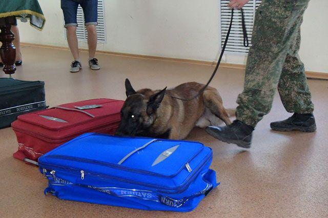 В русском аэропорту обнаружили посылку свзрывчаткой