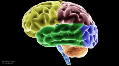Вирус герпеса понижает интеллектуальные способности— Ученые