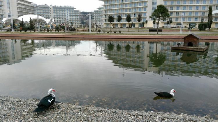 Сочи парк отель пруд с утками