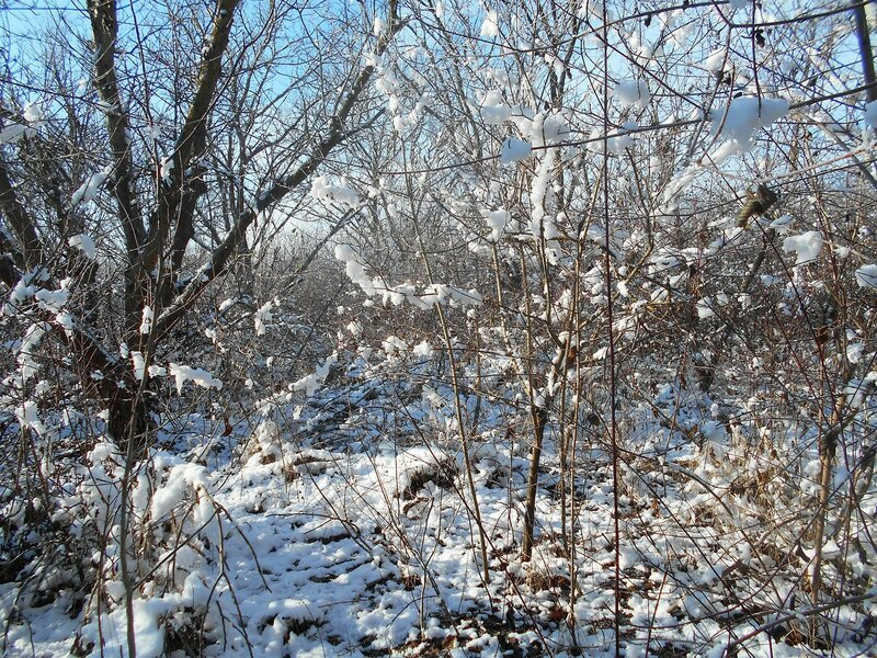 Начало Зимы, в походе, Природы снежное убранство ... DSCN0325.JPG