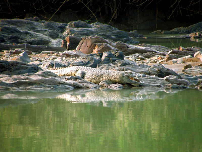 Пастора съели крокодилы при попытке пройти по воде как Иисус