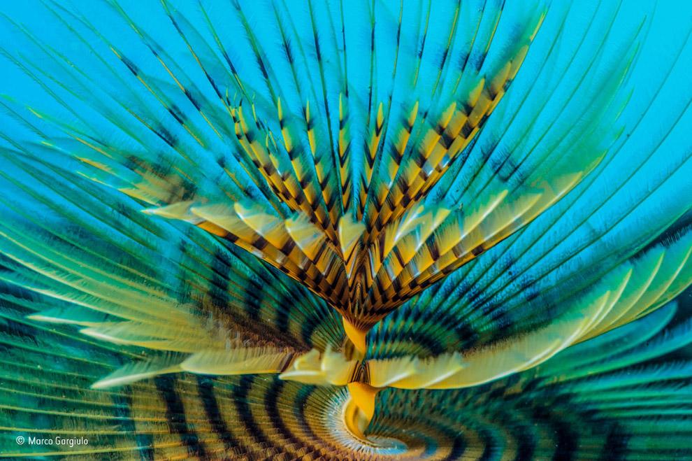 15. Тучи летучих мышей, штат Техас. (Фото Karine Aigner | Wildlife Photographer of the Year 201