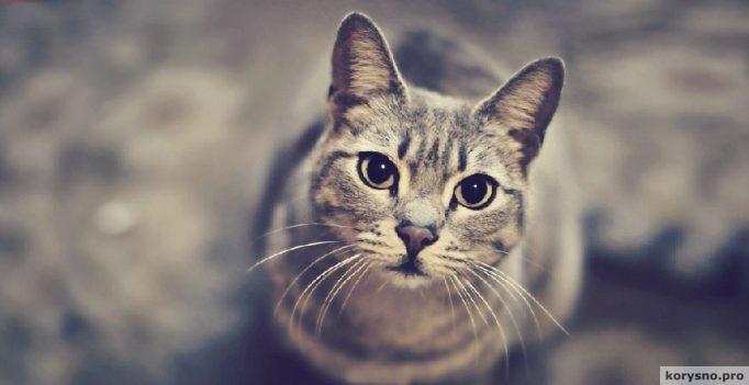 Кошка — показатель благополучия человека (5 фото)