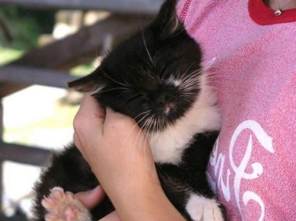 Среднестатистическая кошка урчит с частотой от 25 до 150 герц. Это именно та частота, при которо