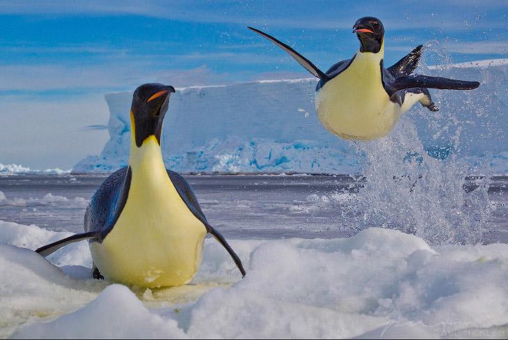 Ледяная красота Пола Никлена (27 фото)