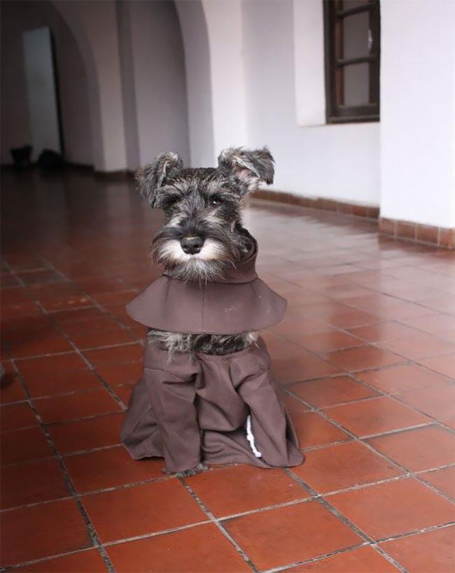 «Вся его жизнь — это игры и бег», — рассказал монах-францисканец Хорхе Фернандес изданию The Dodo.