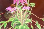 1494458427127-Echinacea-copy (1).jpeg