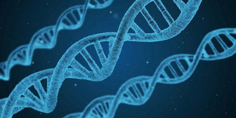 Ученые рассказали, когда появится первый клон человека