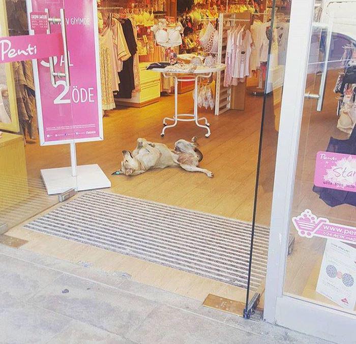 Собаки тоже рады поспать в тепле