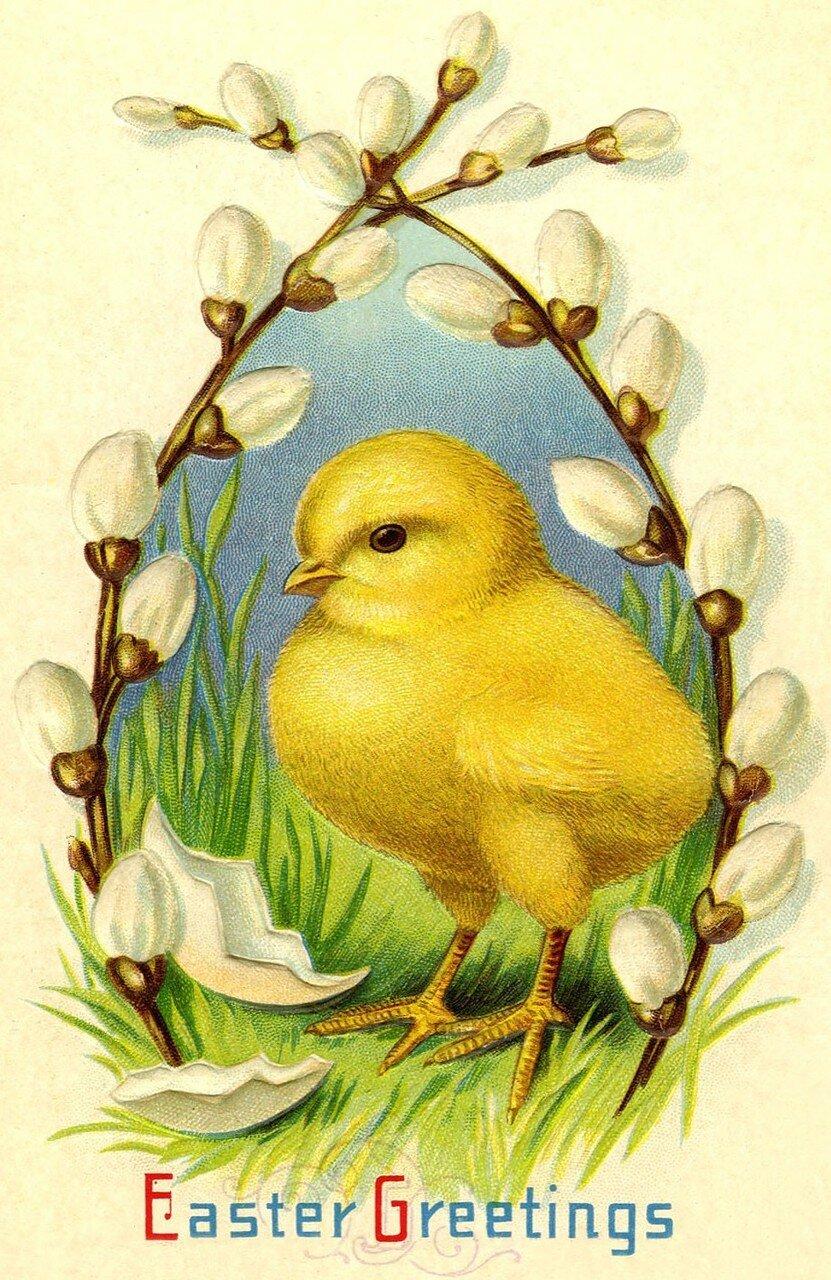 Днем, открытки с цыплятами