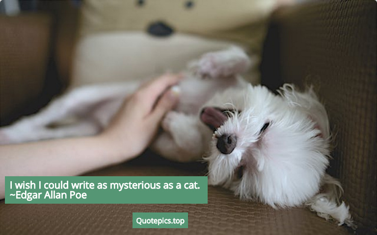 I wish I could write as mysterious as a cat. ~Edgar Allan Poe