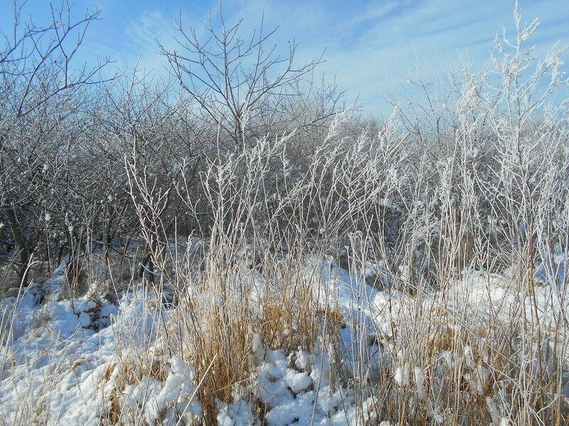 Начало Зимы, в походе, Природы снежное убранство ... DSCN0347.JPG