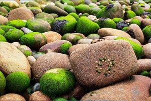 На Природе, в Северной Ирландии, фото из интернета (6).jpg