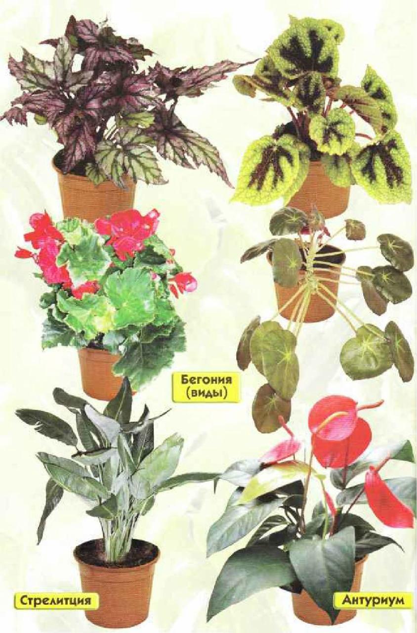 Комнатно-декоративные цветы фото и названия